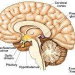 Cinco consejos de salud para descalcificar la Glándula Pineal