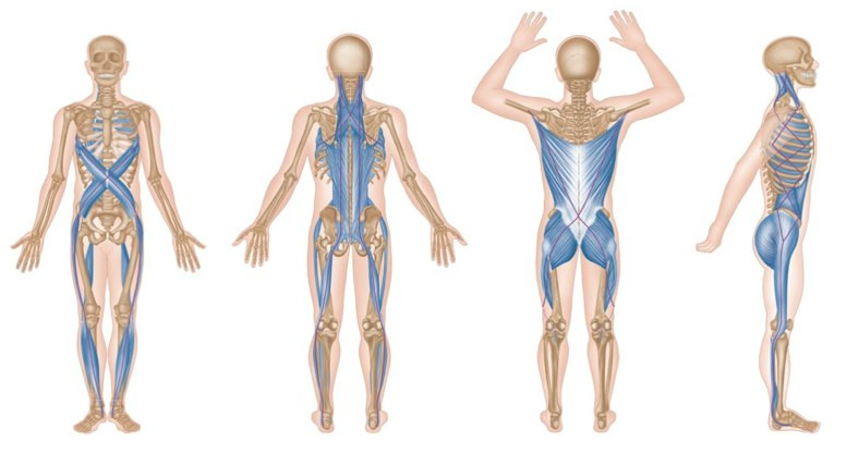 TRIGGER POINT TERAPIA – MERIDIANOS miofasciales