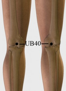 Urinary-Bladder-40