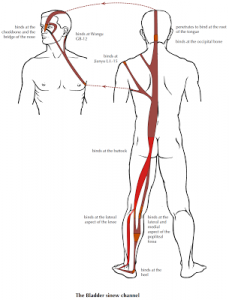 bl-sinew-channel-higher-res