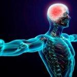 El ritmo de la respiración afecta la memoria y el miedo